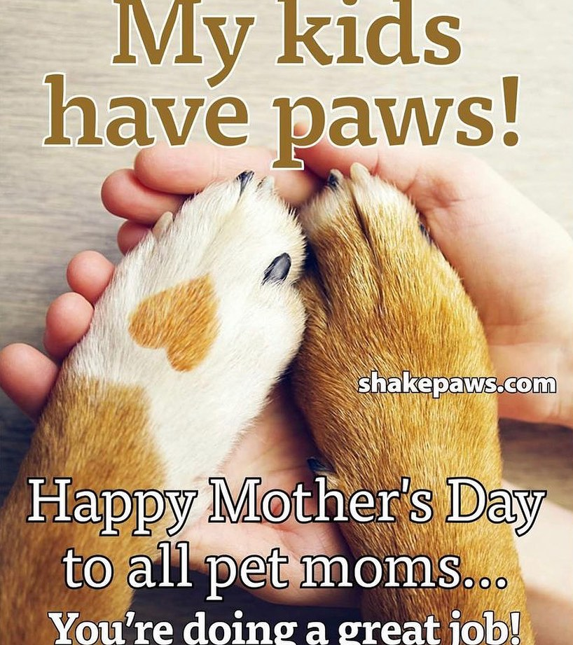 It feels so good to finally be appreciated! . But on a serious note, happy Mother's Day to all the pet moms out there. Not the moms of human children though because we ALL know that's a cakewalk.
